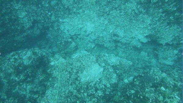 Image for article Investigation into Cayman Islands reef damage