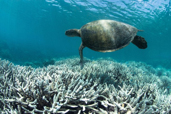 Image for article The implications of coral bleaching