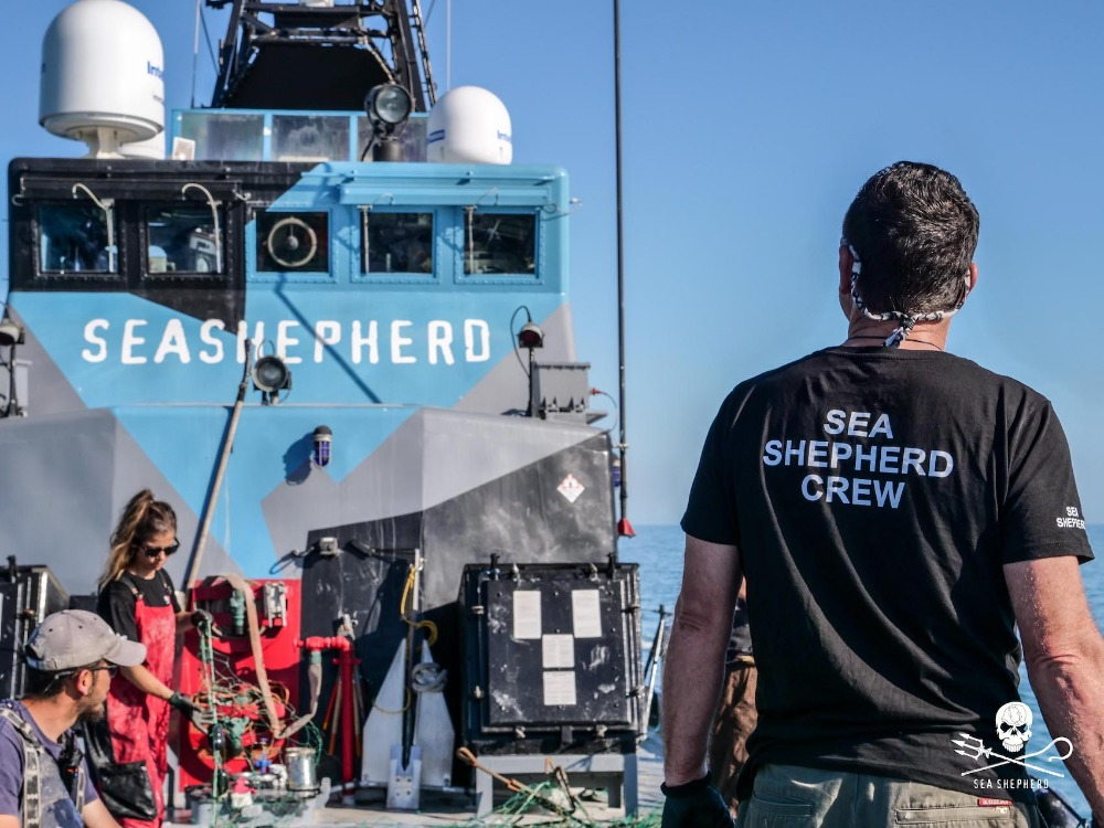 Image for article Superyacht captain joins Sea Shepherd conservation campaign