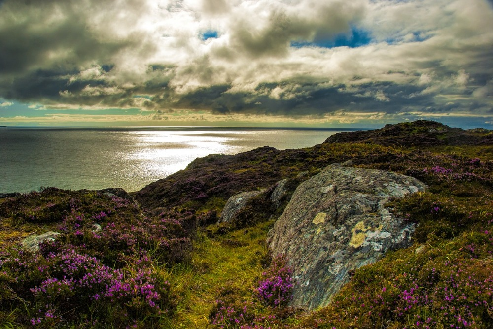 Image for article New Marine Protected Areas proposed in Scotland