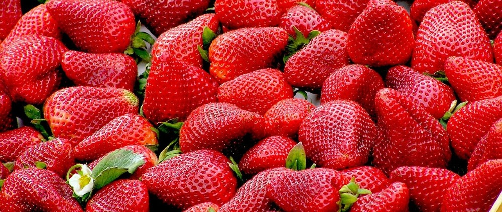Image for article What can we learn from a seedless strawberry?