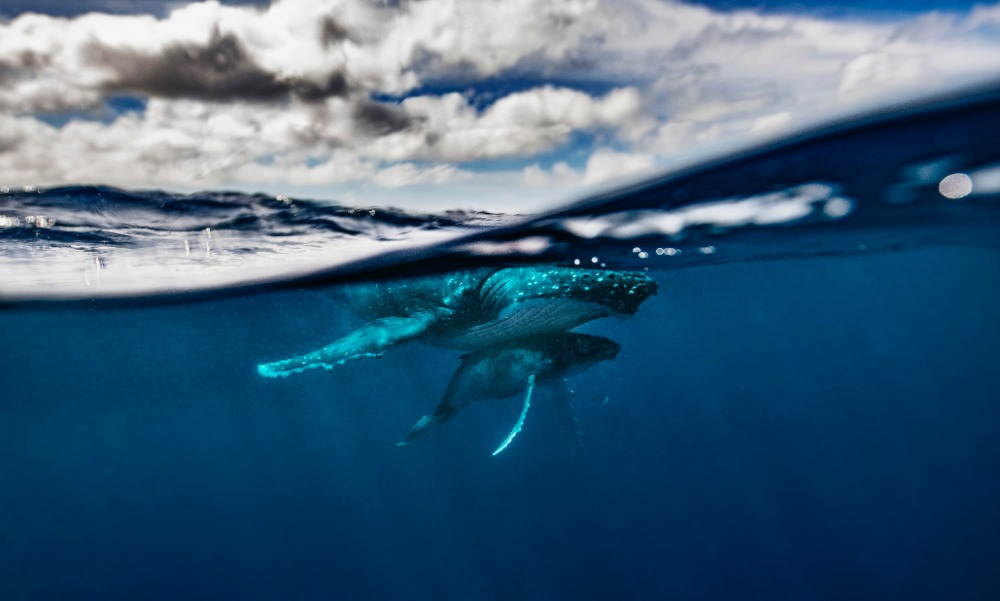 Image for article A disruptive approach to superyacht expeditions