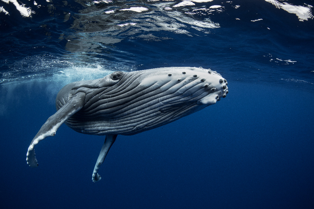 Image for article Water Revolution Foundation launches first endorsed marine conservation project