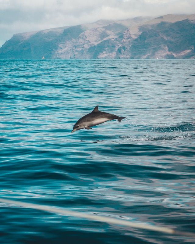 Image for article Why every superyacht should have a dedicated wildlife observer