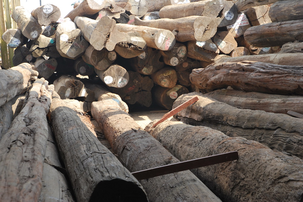 Image for article EXCLUSIVE: Myanmar teak trafficked through Italy