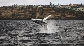 Image for Why every superyacht should have a dedicated wildlife observer